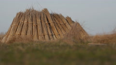 Pile of collected cattail drying in the Danube Delta Stock Footage