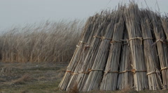 Stock Video Footage of Pile of collected cattail drying in the Danube Delta