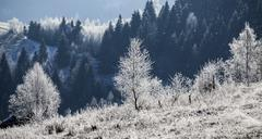 Hoarfrost covered winter landscape Stock Photos