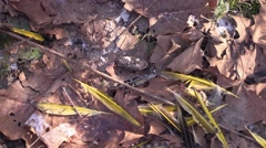 Remains of an owl kill and owl pellet Stock Footage