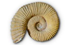 Ammonites fossil in Valencian Community Spain Stock Photos