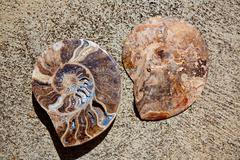 Ammonites fossil snail cut found in Teruel Stock Photos