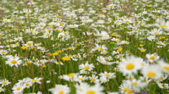 Summertime day in a flower field Stock Footage