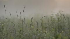 Beautiful dew on grass Stock Footage