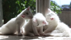 Three Small White Kittens Washes Stock Footage