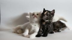 Kittens are having fun Stock Footage