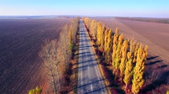 Stock Video Footage of Aerial view of suburban road with autumn trees on the edges