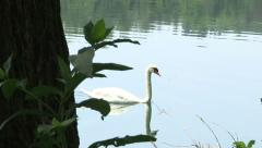 A swan swims Stock Footage