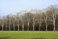 Milan (Italy): Parco Nord at winter Stock Photos