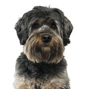 Close up of a Cross breed dog isolated on white - stock photo