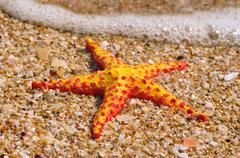 Starfish on the beach - stock photo