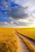 Dirt road in the steppe at dawn - stock photo