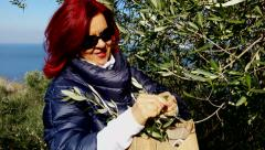 4K  Middle  age  woman gathering  olive leaves - stock footage