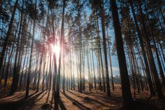 The sun's rays in the forest. - stock photo