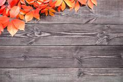 Wooden background with leaves of wild grapes. - stock photo