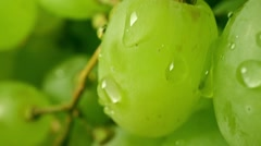 Dew on green grapes. Macro shallow focus pan shot Stock Footage