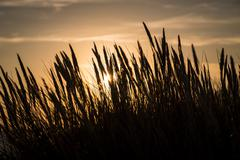 Silhouette of marram grass and sunset Stock Photos