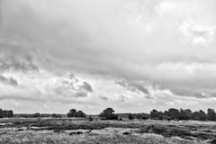 Bw HDR shot of Hiddensee heath with cloudscape Stock Photos