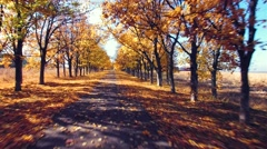 Aerial view of suburban road with autumn trees on the edges - stock footage