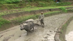 Farmer and buffalo plowing up land Stock Footage