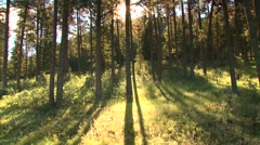 View of forest in Arkansas, USA - stock footage