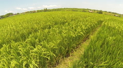 Aerial view of agriculture field, Bali, Indonesia Stock Footage