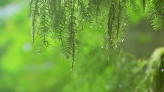 Rain droplets on leaves, Canada Stock Footage