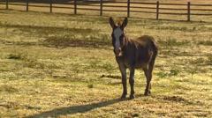 Horse walking in barn, Texas Stock Footage