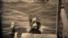 1936: Dog jumping off pier into lake water for a swim, regrets decision. TRYON, - stock footage