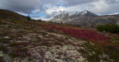 Autumn Tundra Tilt Up to Scenic Mountains 4K Stock Footage