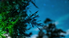 Closeup tree to stars at night with clouds blowing past Rack focus time-lapse Stock Footage