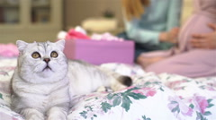 Cat lying on the bed. Pregnant woman shows her friend a tiny baby things. Stock Footage
