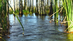 Cypress Swamp in Florida Stock Footage