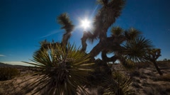 Supermoon in Joshua Tree with Stars Stock Footage