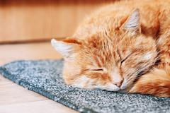 Close up of Peaceful Red Cat Curled Up Sleeping in His Bed Stock Photos