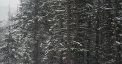 Heavy Snowfall Cross Section Forest in Winter slowmo 4K Stock Footage