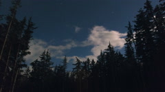 Forest Sky Time Lapse Twinkling Stars and Clouds 4K Stock Footage