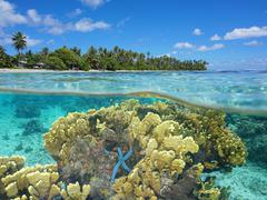 Split over underwater lagoon coral and sea star - stock photo