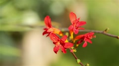 Bright red flower on blurry background Stock Footage