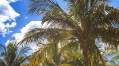 Large Palms in City Park against Blue Sky Azure Sea Stock Footage