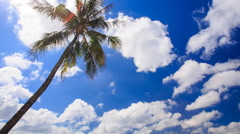 Wind Shakes Palm against White Cumulus Clouds Stock Footage