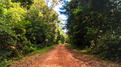 Moving along Shadow Sunny Ground Road in Tropic Forest Stock Footage