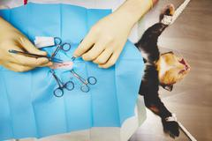 Surgical operation of cat in veterinary hospital Stock Photos