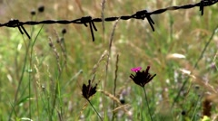 Dried herbs and green herbs moves behind a barbed wire fence Stock Footage