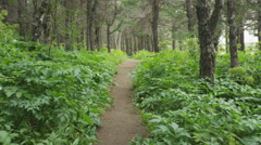 Forest path in pine wood forest in summer Stock Footage