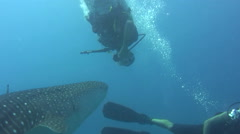 Diver upside down in front of whaleshark (Rhincodon typus) Stock Footage