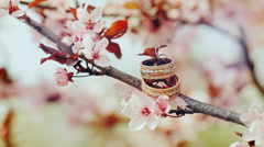 Wedding rings on a branch of a flowering apricots Stock Footage