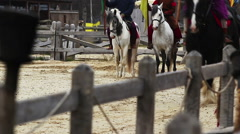 Horse riding at medieval festival. The parade of expensive breeds of horses Stock Footage