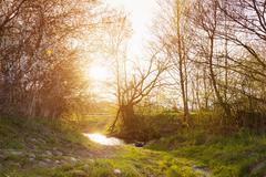 Rural landscape with bourn, blooming trees, sunny spring nature Stock Photos