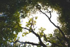 Low angle view of trees against bright sky Stock Photos